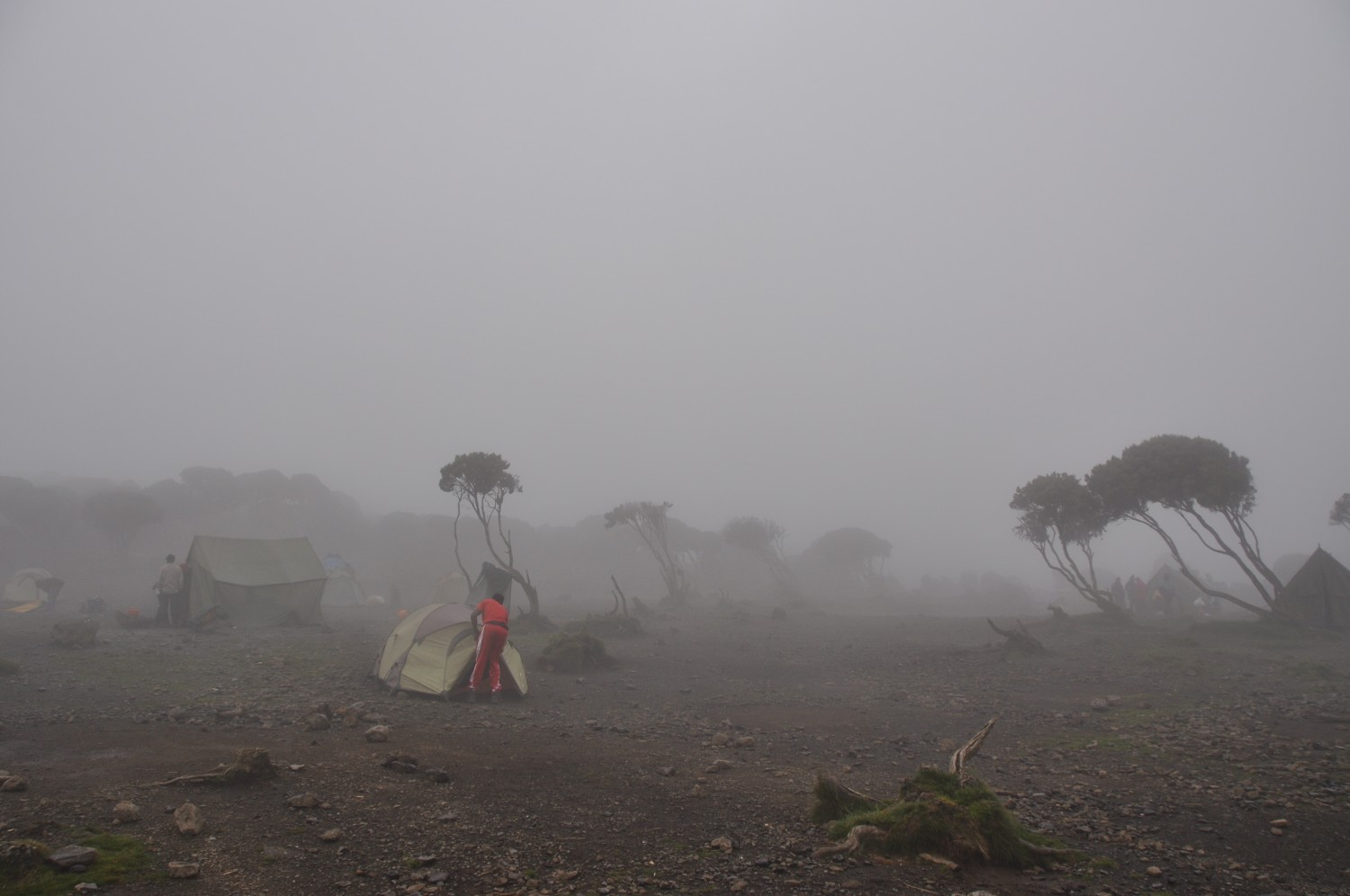 Foggy Shira Camp